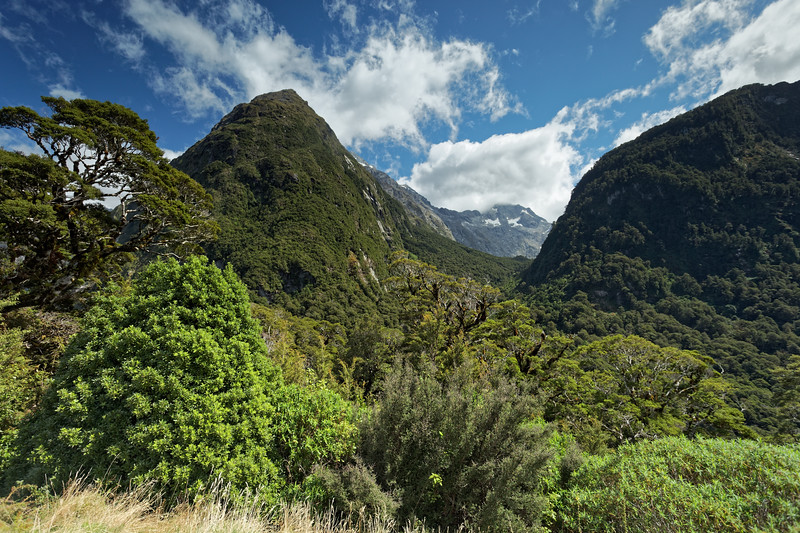 Fiordland mountains above the Hollyford Valley
