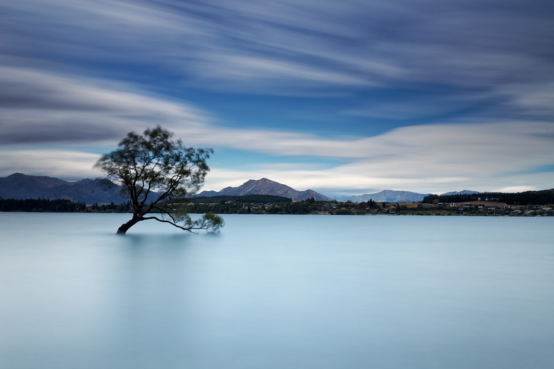 The Wanaka Willow tree in Lake Wanaka