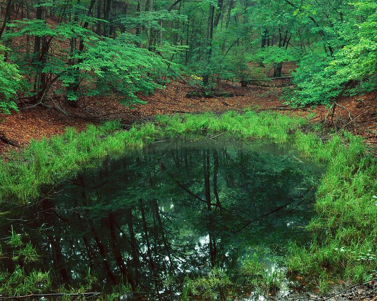 Vernal Pool, Near Thoreau's Cabin I