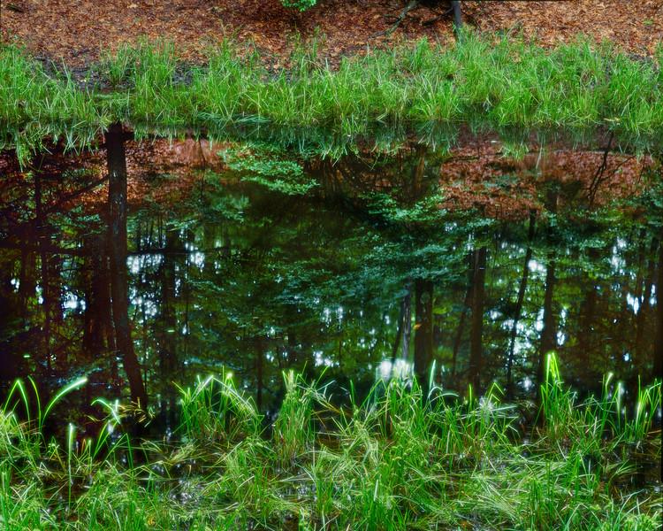 Vernal Pool, Near Thoreau's Cabin II