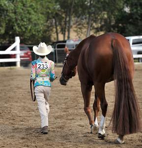 AQHA of SCV Breeders Show/ 2012/ #201-250