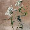 Pursuit of Beauty III-Jardine, 24x24 on canvas