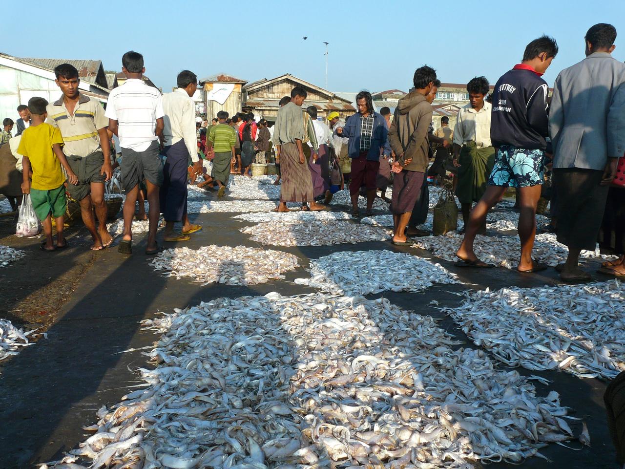 Burma-Sittwe 254