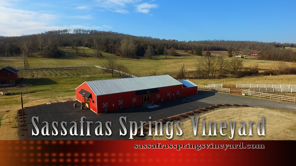 Sassafras Springs Vineyard