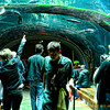 There is an area where you go underneath the aquarium and be able to look up into it and see above you not only the aquarium but part of the Rain Forest.