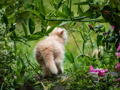 Little fluffy kitten in the grass