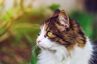 Beautiful tricolor cat on the sun