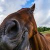 Horse close-up portrait on pasturage, summer day