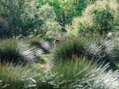 Young fallow deer in safari park, Sigean, sunny day