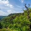 Stunning landscapes of the Vosges. Moss on the stones, views of the mountains, forest, nature.