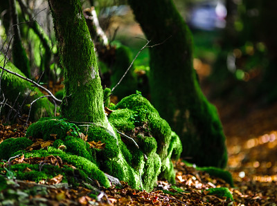 Beautiful green moss in autumnal forest, sun and shadows, natural concept