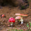 Mushrooms close-up view, autumn in the forest