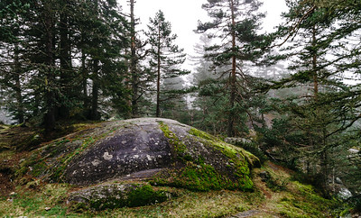 Big stone in the autumnal forest, nature concept