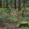 Forest natural view, trees and stumps with moss