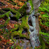Beautiful trunk of the tree closeup view, autumnal forest