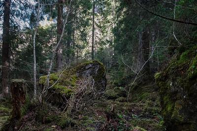 Magic forest, autumn, high mountains