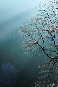 Direct sunlight through the branches and fog