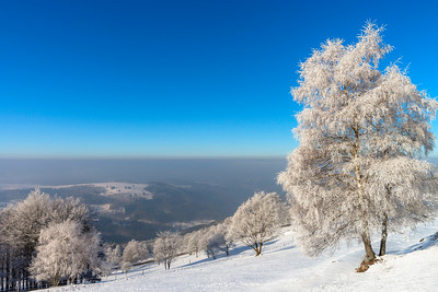 Beautiful white frozen trees on blue sky background. Picturesque and gorgeous wintry scene.