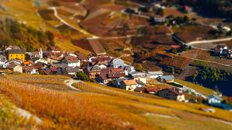 Tilt-shift aerial view of autumnal vineyards in Switzerland