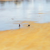 Man playing with his dog on the beach sand,Bretagne