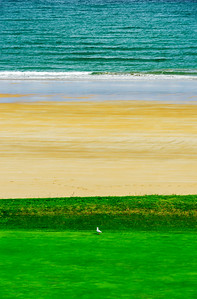 White gull on green grass near the sea, tricolor abstract picture
