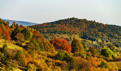 Colorful autumnal forests in Alsace, France
