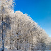 Winter forest with frozen trees majestic view. Winter in nature. Picturesque and gorgeous wintry scene.