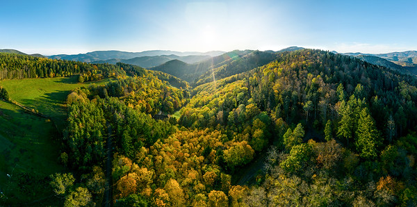 A drone rises above a multi-colored valley in the Vosges. Yellow, orange, red tree crowns. Multicolored autumn vineyards.