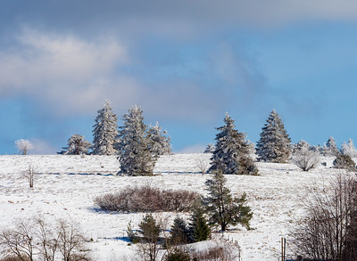 Untouched snow and snowy fir trees against a background of blue clear sky