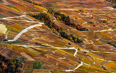 Rusty colored autumnal vineards landscape aerial view