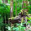 Tree root similar to animal