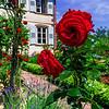 Botanic garden with blossom flowers, Andlau, Alsace