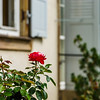 Last flowers in the autumnal garden