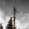 Old dry tree standing alone in the mountains