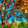 Vivid autumnal colors of leaves in the park