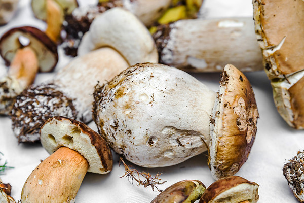 Big and beautiful ceps (Boletus edulis) directly from the forest
