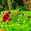 Little girl smelling tulips in the garden