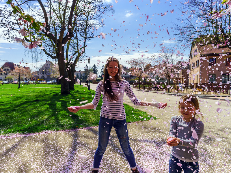 Two sisters playing with falling petals on the sun