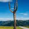 Austrian Alps in summer. Soft curves of high green hills, alpine pastures.
