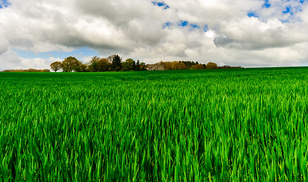 Vivid green field closeup view with horizon on background