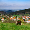 Brabancon belgian horse on the farmland, Alsace, France