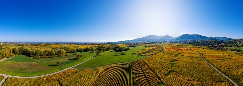 Aerial drone view of yellow vineyards in Alsace, France. Sunny day with blue sky over the land.