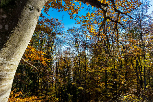 Colorful autumn forest view, Alsace