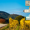 Very beautiful yellow Alsace vineyards in the fall, after grape harvest.