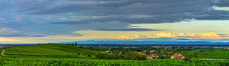 Landscape panoramic view of vineyards in Alsace, France