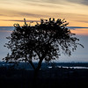 Contrast tree silhouette on the sunrise background