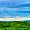 Beautiful green hill with vineyards and blue sunset sky, Alsace, France