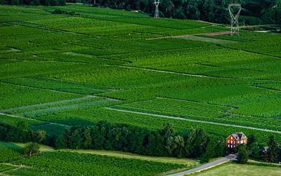 Little alsacien village Scherwiller in green vineyards, aerial view, summer time