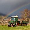 An old tractor stands in front of vineyards amid a rainbow and the Vosges mountains in Alsace. Bright spring landscape. Awakening from the winter.