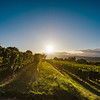 Sunset in the vineyards of Alsace, summer
